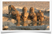 Travel Expert African Safaris