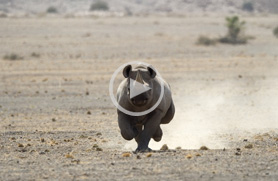 Namibia Travel Guide - Videos